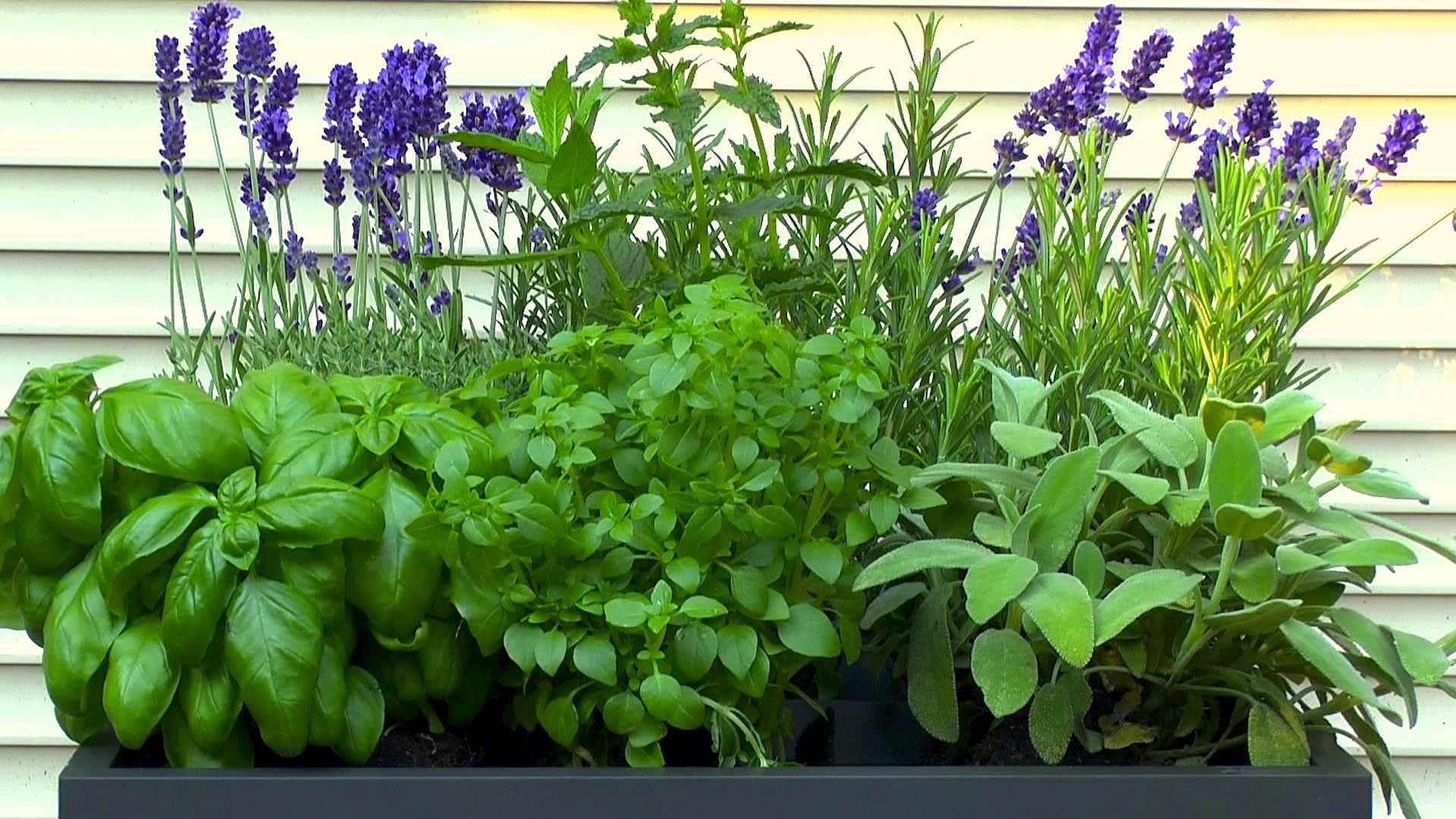 kräuter pflanzen balkon topf_23:16:22 ~ egenis : inspirierend, Gartengerate ideen