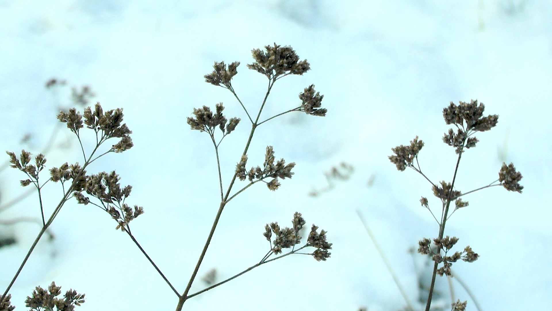 pflanzen berwintern garten natur gestalten erleben. Black Bedroom Furniture Sets. Home Design Ideas