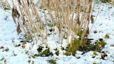 akb-staude-winter