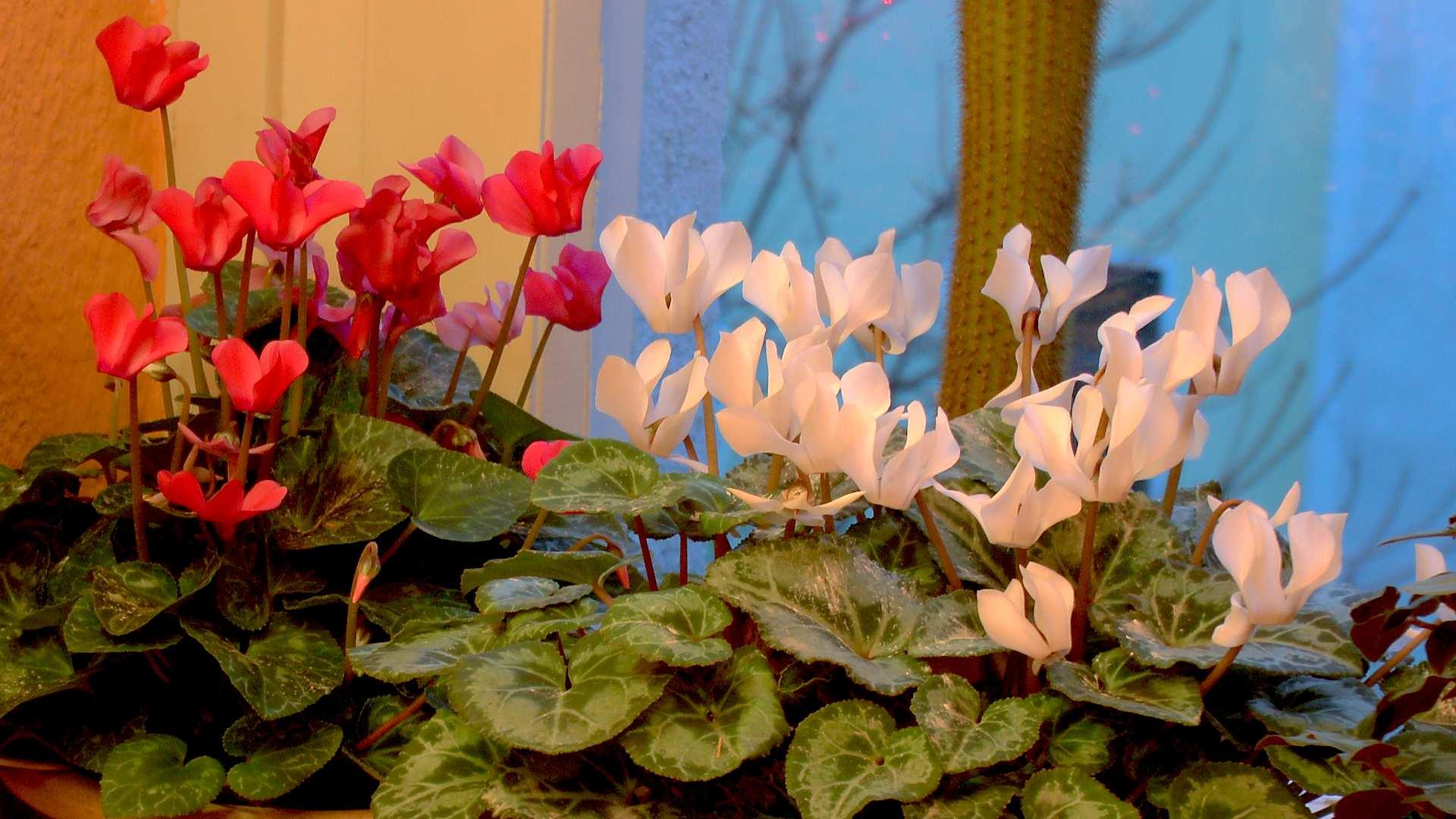 Pflanzen Wohnzimmer Raumklima pflanzen wohnzimmer raumklima