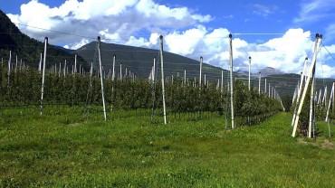 apfel-plantage-aufzucht