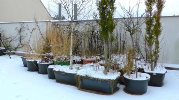 gehoelz-winterhart-topf