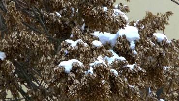 goetterbaum-fruechte-winter