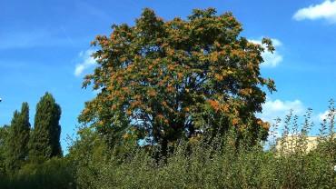 goetterbaum-landschaft