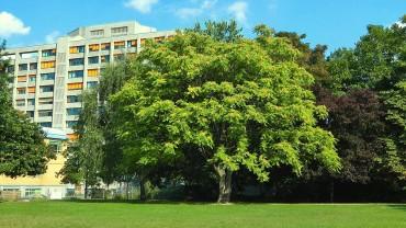 goetterbaum-park
