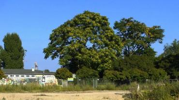 goetterbaum-pflege-brache