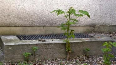 goetterbaum-schneiden