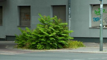 goetterbaum-wildwuchs