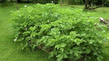 kartoffel-hochbeet