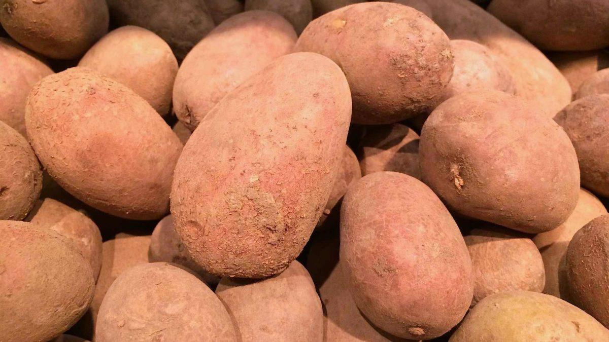 Beliebte Kartoffelsorten Gartennatur