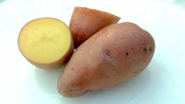 kartoffel-rosara