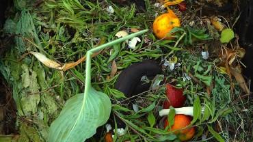 kompost-organischer-abfall