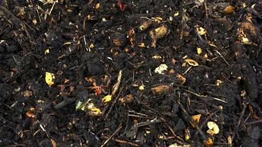 kompost-roh