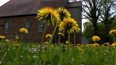 loewenzahn-kirchhof