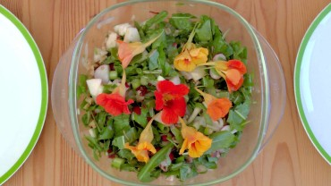 loewenzahn-salat