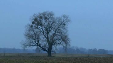 mistel-winter