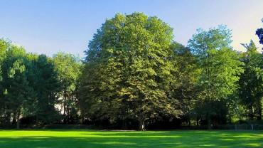 rosskastanie-baum-park