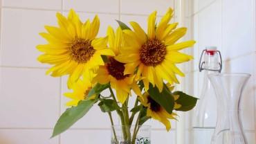 sonnenblume-schnittblume-vase