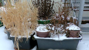 stauden-topf-winter