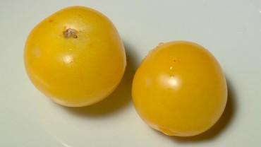tomate-frucht-gelb