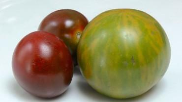 tomate-frucht-gruen-braun
