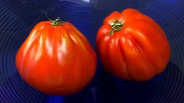 tomate-ochsenherz
