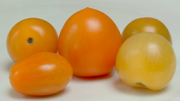 tomaten-frucht-gelb-orange