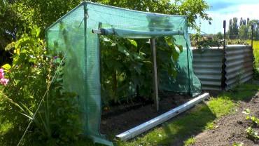 tomatenzelt-regenschutz