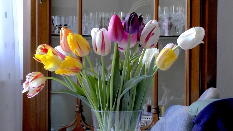 Tulpe Tulipa Im Pflanzenlexikon Gartennaturcom