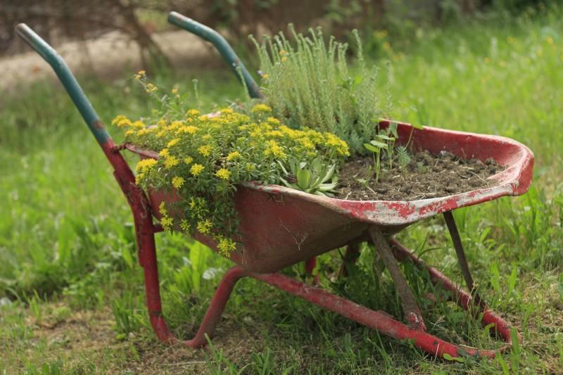Meist wird eine Schubkarre genutzt, um Erd- und Pflanzenmassen zu bewegen. Hier dient der Klassiker als bepflanztes Deko-Element. pixabay.com © Ikaika (CC0 Public Domain)