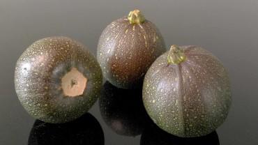 zucchini-frucht-rund-gefleckt